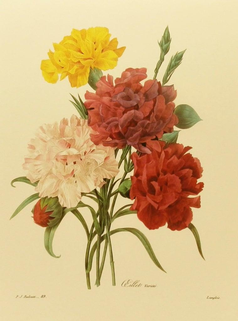 Vintage Carnation 121