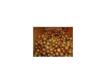 7 White Scuppernong/Muscadine Grape Seeds-1229