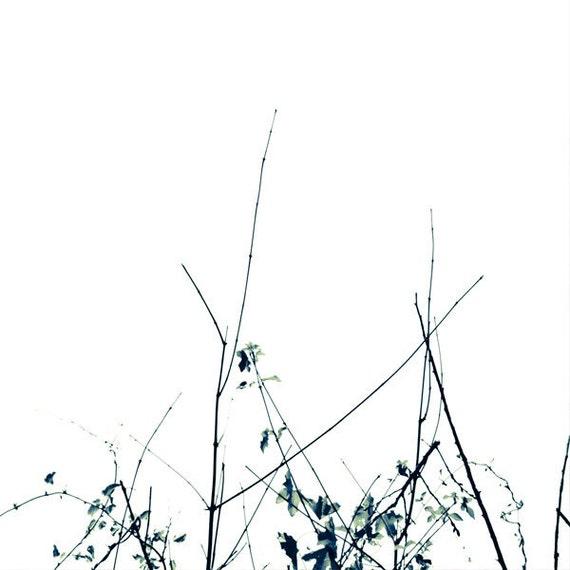 Black and White Nature Photo. Minimalist home decor. Unisex gift. 8x8 or 8x10, nursery art, express shipping
