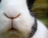 Bunny Photograph 7x5 Color Rabbit Art