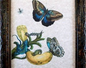 Butterflies and Bananas Art Print from 1705 on Parchment Paper