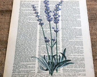 Lavender Flowers Art Print on Vintage Dictionary Book Page