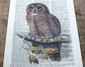 Vintage Mottled Wood Owl Art Print on Vintage Dictionary Book Page