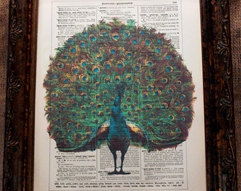 Peacock Art from 1910 Art Print on Encyclopedic Dictionary Book Page from 1896