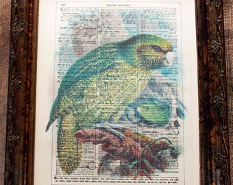New Zealand Kakapo Art Print from 1888 on Encyclopedic Dictionary Book Page from 1896