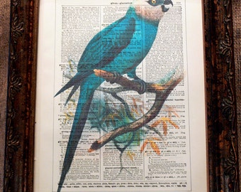 Brazilian Spix's Macaw Art Print from 1878 on Encyclopedic Dictionary Book Page from 1896