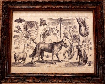 Wolf-Dog-Sheep Line Art from 1600's Art Print on Parchment Paper