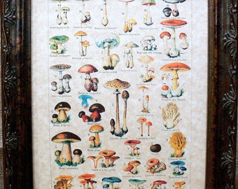 Types of Mushrooms Art in French from 1912 Art Print on Parchment Paper