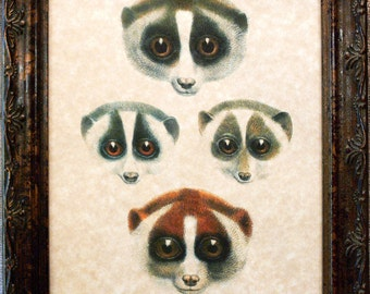 Faces of Lorises Art Print from 1904 on Parchment Paper