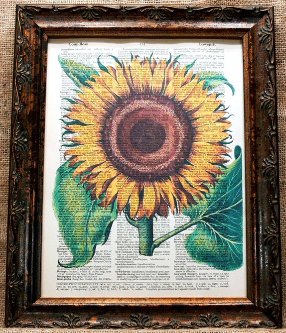 Sunflower Art Print from 1713 on Vintage Dictionary Book Page