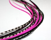 """Hot Pink, Black & White Grizzly Feather Extension, (5) 8-10"""" Long and Skinny feathers, free micro link bead"""