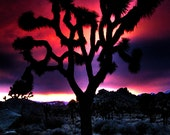 Joshua Tree Sunset - Red, Purple, Pink, Desert, Silhouette - Fine Art Photography - California, 8x12