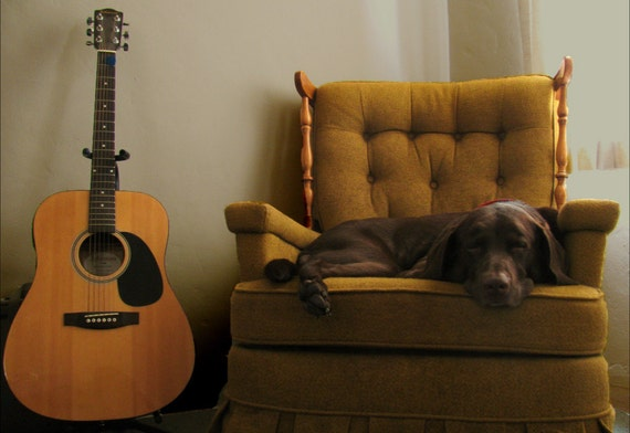 Animal Photography - Lazy Day - Pets, Dog, Puppy, Sleepy, Relaxing, Animals, Guitar, Music - Fine Art Photography