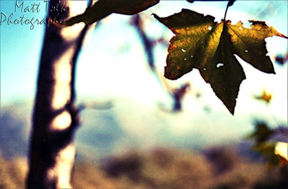 California Photography - Big Sur California - Leaf, Fall, Seasons, Brown, Mountains, Nature - Fine Art Photography, Woods, Trees, Forest