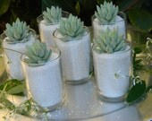 Succulent Wedding Favor, Succulent Bridal Shower Favor, Formal Wedding Favor, Summer Wedding Favor, Special Event