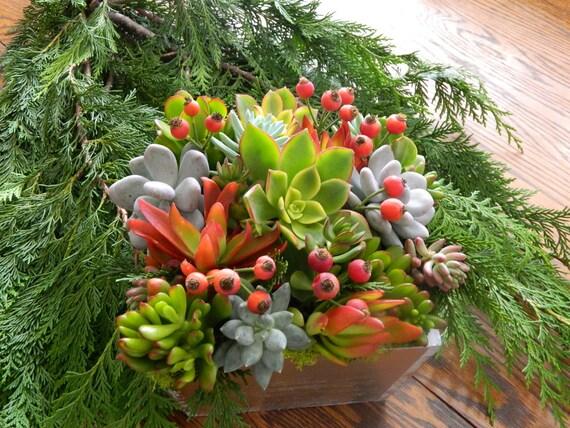 Succulent holiday centerpiece
