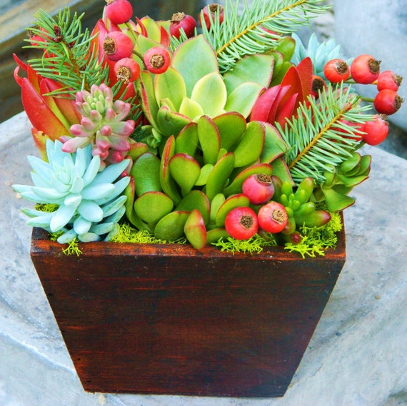 Succulent Centerpiece Holiday Centerpiece Succulent
