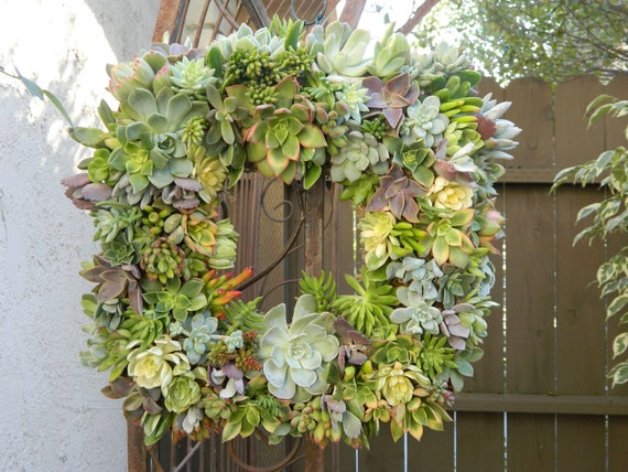 "Succulent Wreath Square Succulent Wreath 15"" Succulent Wreath Fall Wreath Wedding Centerpiece"