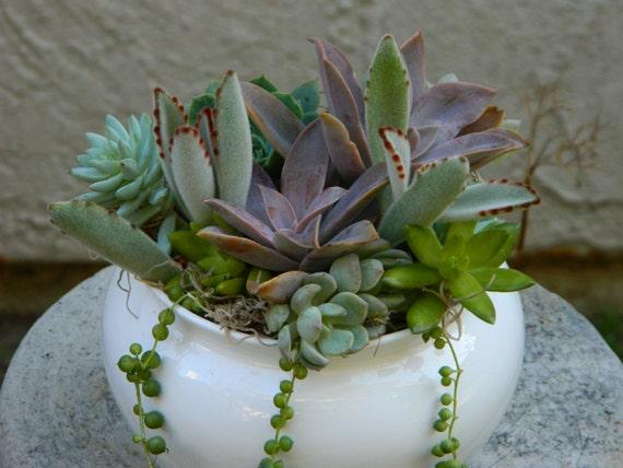 Succulent  Centerpiece, Succulent Garden, Succulent Tabletop - Succulent Wedding Centerpiece,Table Decor