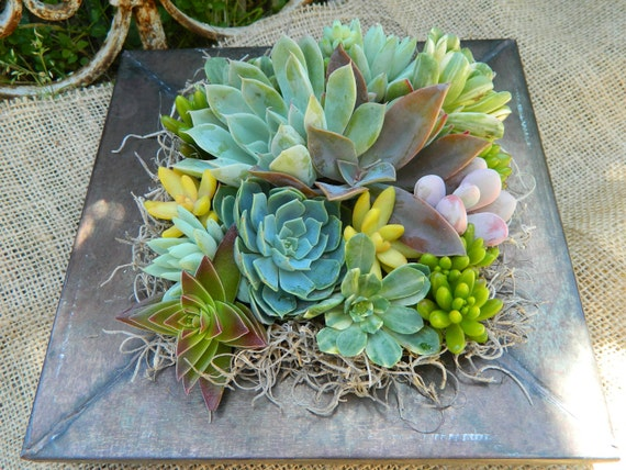 Succulent Centerpiece, Succulent Garden, Succulent Tabletop, Succulent Wedding Table Decor, Fall Wedding Table