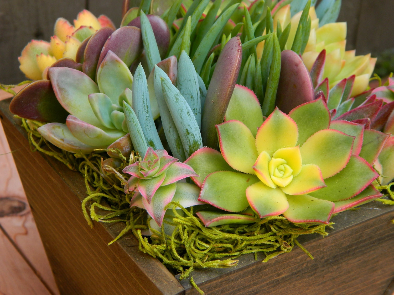 Garden Centre Wedding Gift List : Succulent Centerpiece Succulent Garden Summertime Succulent