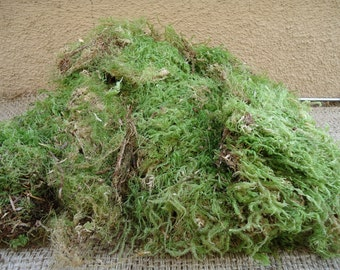Large portion green sheet moss for terrariums and orbs