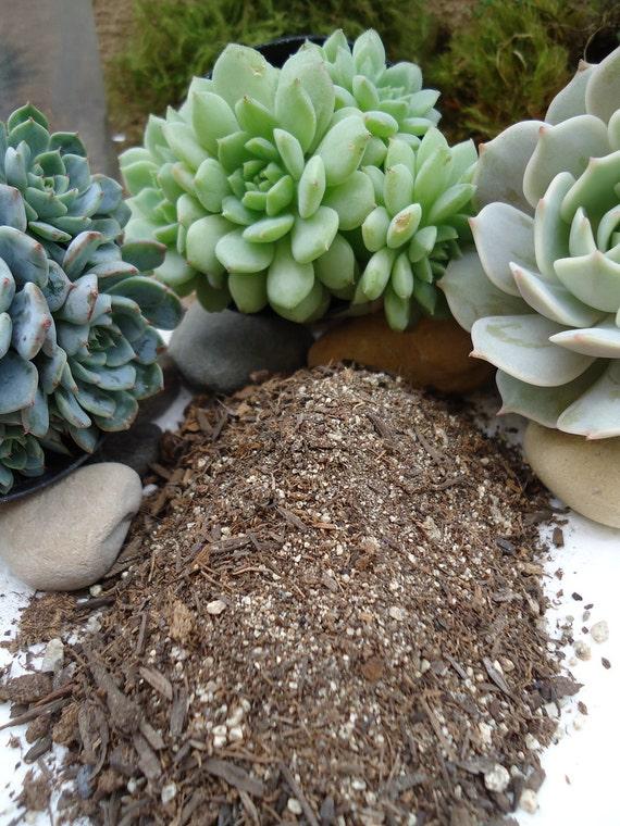 1LB. Succulent Soil Blend