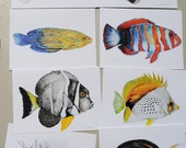 Fish Art,  Reef Fish Note Cards Series 3