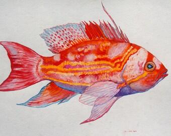 Fish  Art- Yellow Lined Anthias Watercolor