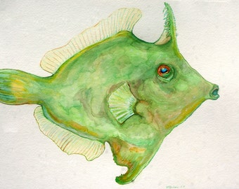 Green Filefish