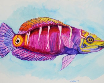 Mystery Wrasse Watercolor