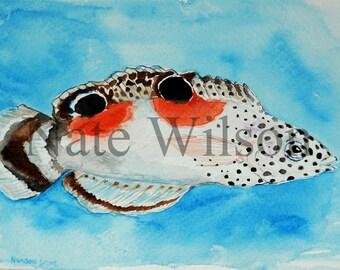 "Twin Spot Wrasse Watercolor ( 5"" x 7"")"