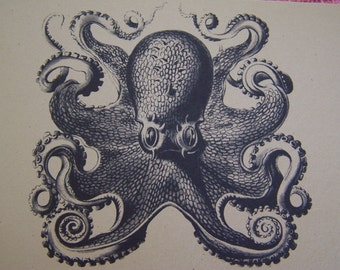 Octopus Set of ANY 3 Greeting Note Cards Invitation Recycled Brown Kraft Cardstock with matching envelope 5 x 7""