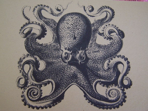 """Octopus Set of ANY 3 Greeting Note Cards Invitation Recycled Brown Kraft Cardstock with matching envelope 5 x 7"""""""