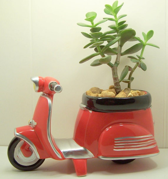 Succulent Jade planter Red Scooter diy kit Desk Accessories Dorm Room Decor