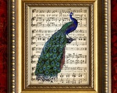 PEACOCK 1 Vintage Color Art Print 8x10 on Antique Sheet Music Page