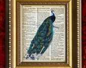 PEACOCK  Vintage Dictionary Print or Antique Book Page Art Print 8x10