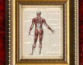 Antique Book Page Art Print HUMAN MUSCULAR System Back in COLOR on Vintage DIctionary Page Art Print 8x10