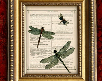 Vintage DRAGON FLY TRIO Print on Dictionary Page Art Print Book Page Art Print Home Decor Wall Decor 8x10