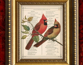 Dictionary Art Print CARDINAL Antique Book Page art print BIRDS  Vintage Art Print on Recycled Upcycled  Dictionary Page art print 8x10