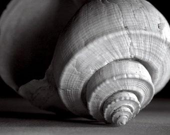 Black and White, Sepia Tone, Welk, Shell, Conch, Coastal, Original Signed Print by Photographer, Guy Pushée