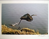 Heron Photo Card- Bird Taking Off- by Michael Arana-Any Occasion Blank Greeting Card