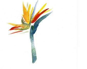 Handpainted Greeting Card Bird of Paradise Watercolor Art Any occasion Women Teens Blank Orange under 10