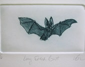 Hand made print, Drypoint Bat. Cute Long Eared Bat. Hand printed edition