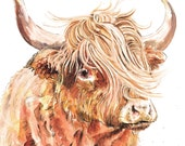Mounted Limited Edition Giclee Print of  'Rachel' Highland Cow