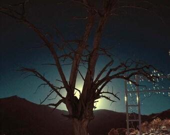 Digital photo, giclee print, 5x7, color infrared,  graveyard, sundown, tree, silhouette, twilight