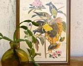 vintage arthur singer goldfinch print no. 6