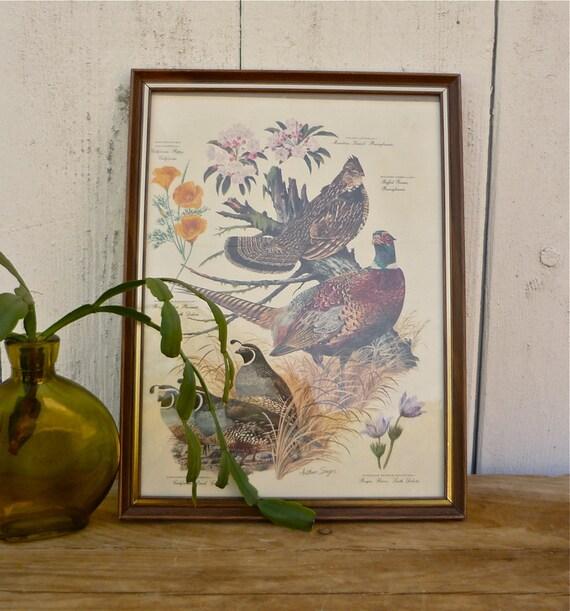 vintage arthur singer pheasant, grouse, and quail print no. 3