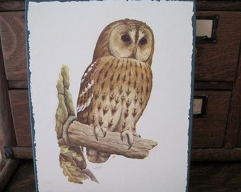 Vintage R. A. Vowles Owl Print on Plaque