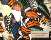 10 pairs of real butterfly wings order